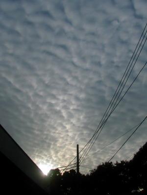 2009年11月16日午後2時45分鎌倉市二階堂