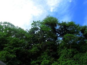 新緑 神奈川県鎌倉市