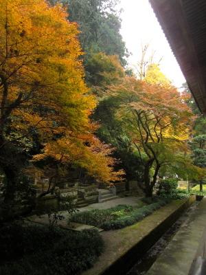鎌倉 妙本寺の紅葉