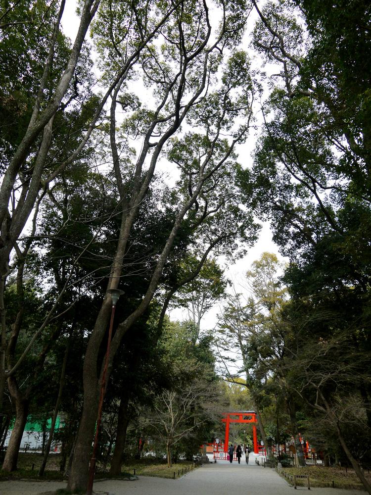 下賀茂神社 糺の森