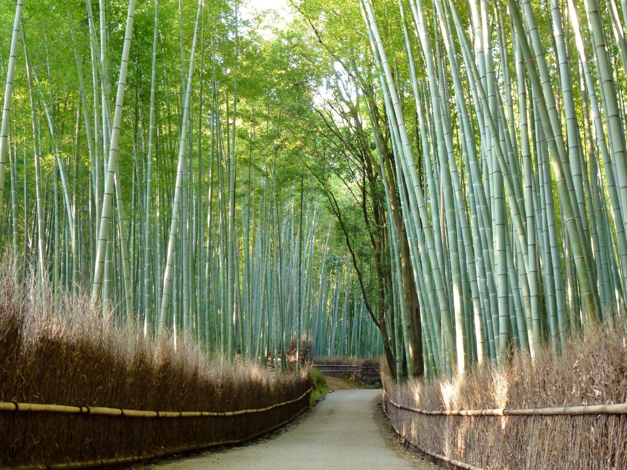 嵯峨 竹林の道