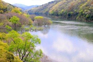 早春の宇治川