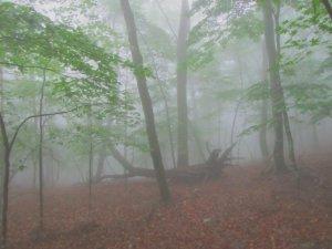 霧の鶴寝山