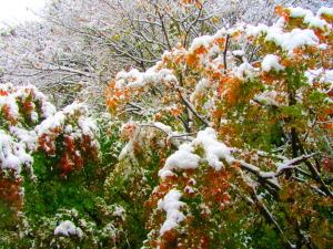 鎌倉市二階堂 紅葉に雪