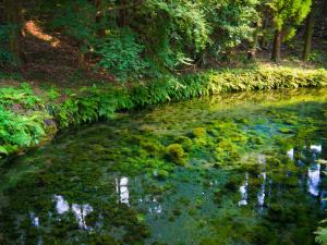 阿蘇白川 水源附近 「キロクマ」フリー写真